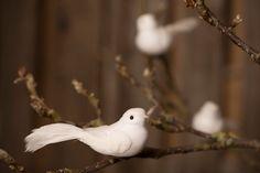Hvid dekofugl med lang hale