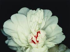 ARAKI EXHIBITION @museeguimet, Araki Yes or No? / Fête des anges : scènes de sexe (Feast of Angels : Sex Scenes) 1992 impression ultérieure directe RP H. 45,4 cm ; L. 60,1 cm Taka Ishii Gallery, inv. NA-PH_AbA_014 © Nobuyoshi Araki / Courtesy Taka Ishii Gallery
