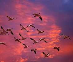 Migrating against a beautiful sky