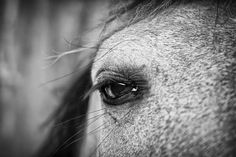 Soulful Horse Eye Photograph by Priya Ghose - Soulful Horse Eye Fine Art Prints and Posters for Sale Art Prints For Sale, Fine Art Prints, Fine Art Photography, Equine Photography, Creative Photography, Photography Ideas, Sale Poster, Cool Artwork, Artist At Work