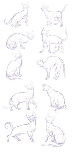 Siamese looking cats, every position you could think of... this is amazing!!!!