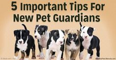 Here are the 5 important tips for creating a mutually satisfying and long-lasting bond with your newly adopted pet. http://healthypets.mercola.com/sites/healthypets/archive/2016/03/19/creating-mutually-satisfying-bond-with-newly-adopted-pet.aspx