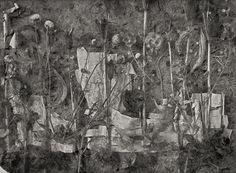 John Blakemore   Amergen - The garden in winter 1991