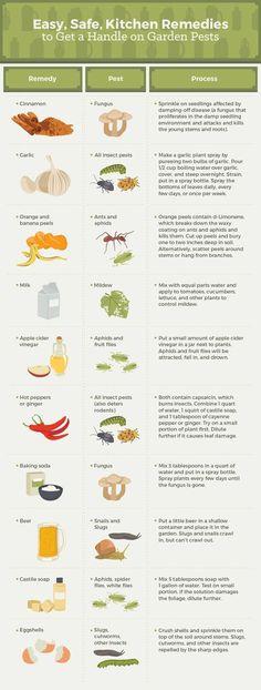 Kitchen Remedies for Garden Pests #FWx