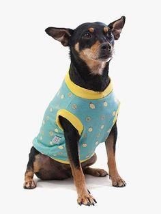 A Camiseta para Cachorro  - Tropicália Lemonade da Cacau Dress Pet é uma roupa com estampa tropical de limões sicilianos que vai deixar seu pet na moda e refrescante como uma limonada!