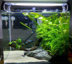 Rookie in aquascaping world 🇲🇾✌ Betta Aquarium, Aquarium Aquascape, Planted Aquarium, Tropical Fish Aquarium, Tropical Fish Tanks, Aquascaping, Small Fish Tanks, Cool Fish Tanks, Betta Tank
