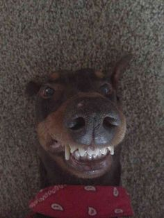 This smiler. | The 42 Most Awkward Dogs Of 2014