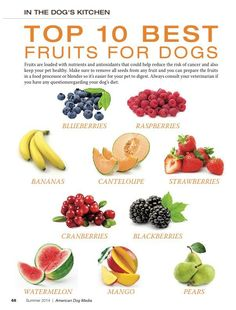 Top 10 Best Fruits For Dogs: Fruits are loaded with nutrients and antioxidants that could help reduce the risk of cancer and also keep your pet healthy. Make sure to remove all seeds from any fruit and you can prepare the. Dog Biscuit Recipes, Dog Treat Recipes, Healthy Dog Treats, Raw Food Recipes, Healthy Foods For Dogs, Pet Treats, Healthy Dishes, Healthy Meals, Make Dog Food