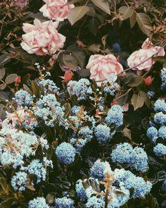 Colour-palette inspiration. ⚡️ Palette, Illustrators On Instagram, College, Colour, Wallpaper, Illustration, Plants, Inspiration, Design