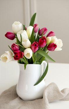Creamy White & Dark Pink Tulips in White Pitcher-Ana Rosa