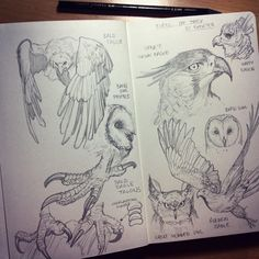 Creatuanary 01 Birds Of Prey Studies von. - Creatuanary 01 Birds Of Prey Studies von rafater , - Bird Drawings, Art Drawings Sketches, Animal Drawings, Cool Drawings, Tattoo Drawings, Drawing Birds, Pencil Drawings, Amazing Drawings, Sketch Drawing