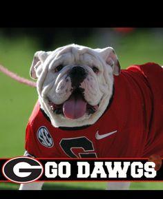 College Football Games, Sec Football, Braves Baseball, Georgia Bulldog Mascot, Georgia Bulldogs Football, Funny Bulldog Pictures, Bulldog Wallpaper, Georgia Girls, Cutest Dog Ever