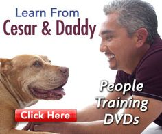 You can learn more from Cesar than just teaching your dog.  His lessons can work with us two-legged animals as well.