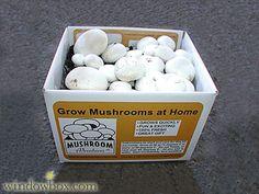 Grow your own mushrooms! #DIY #easy#gardening