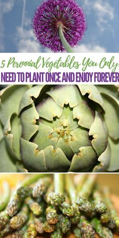 5 Perennial Vegetables You Only Need To Plant Once and Enjoy Forever #garden #gardening #perennial