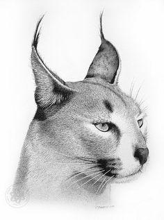 Cool Art Drawings, Beautiful Drawings, Animal Sketches, Animal Drawings, Small Dope Tattoos, Eagle Artwork, Stippling Drawing, Graphite Art, Pen Illustration