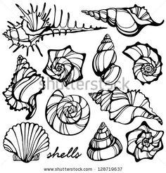 illustration of shells - stock vector