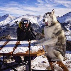 A man and his husky show us that dogs are really our best friends. Animals And Pets, Funny Animals, Cute Animals, Education Canine, Alaskan Malamute, Tier Fotos, Shiba Inu, Akita, Training Your Dog