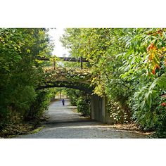 We love the scenery around the Alpharetta Arboretums! This shot was taken at the Webb Bridge Park Arboretum.
