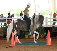 Show Horse Gallery - White Star's Fiesta, Paso Fino