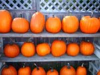 Pumpkins at a fruit stand, photo by Pam Rotella