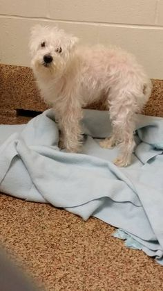 homas J. O'Connor Animal Control and Adoption Center Liked · Yesterday · Edited ·  ·     Do you know me? I am about six years old male terrier mix! (breed identification is our best guess) I was found on Newland Springfield.