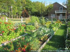 Vegetable Garden by Claudia Barber
