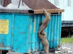 Dumpster buddy bears