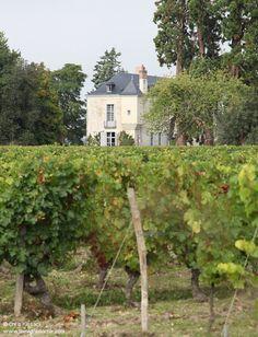 Loire Valley Wine, Vineyard, Plants, Vine Yard, Vineyard Vines, Plant, Planets