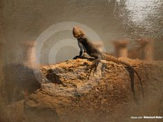 A personal favorite from my Etsy shop https://www.etsy.com/listing/540406621/original-photography-of-lizard-sunning