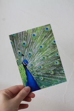 """Carte postale """"le paon"""" : Cartes par le-petit-bazar-des-trinomettes-en-delire"""