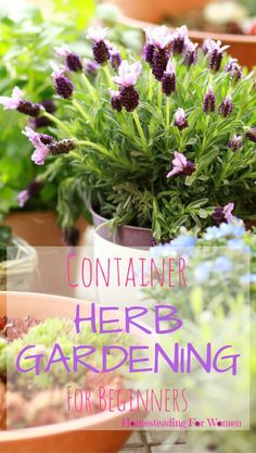 Container Herb Gardening For Beginners growing herbs no matter where you live.