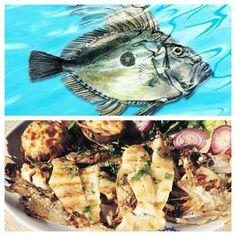 Dülger balığı misina'da farklı menülerde hazırlanıyor...