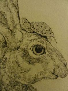 tortoise drawing for pinterest - photo #31