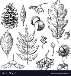 Autumn set with leaves berries fir cones vector image on VectorStock Doodle Inspiration, Pine Tattoo, Natur Tattoos, Autumn Tattoo, Forest Drawing, Handpoke Tattoo, Thistle Flower, Nature Sketch, Leaf Drawing