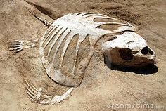Turtle Fossil Royalty Free Stock Photography - Image: 2708827