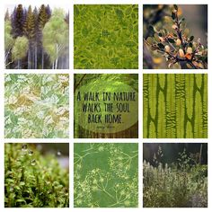 Forest Flowers, My Mood, Walking In Nature, Back Home, Affirmations, Dandelion, Reflection, Feelings, Plants