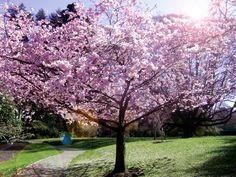 Blossom tree by Hayley Kennedy, via Behance