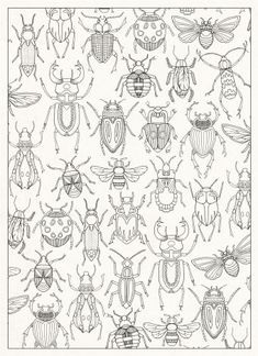 Containing 20 detachable postcards of Johanna Basford's beautiful drawings from the inky world of her Secret Garden. Bug Coloring Pages, Coloring Books, Doodles Zentangles, Bug Art, Insect Art, Bugs And Insects, Art Plastique, Art Lessons, Embroidery Patterns