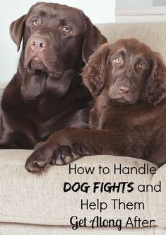 How to Handle Dog Fights & Smooth Things Over When It Ends: Scrapes at the park keeping you & your pooch home? Check out our tips on how to handle dog fights and help dogs get along better after the fight is over.
