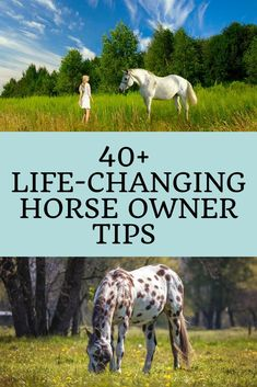 Whether you're new to horses or you just need to brush up on the basics, here are helpful tips for horse owners. Dressage, Horse Care Tips, Types Of Horses, Equestrian Outfits, Equestrian Style, Equestrian Fashion, Equestrian Problems, My Horse, Horse Riding Tips