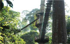 Borneo Rainforest Lodge, Lahad Datu, Sabah, Malaysia
