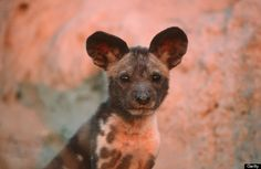 It's Endangered Species Day, But These Adorable Babies Deserve ...