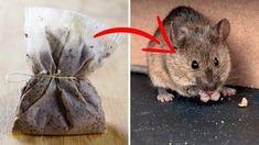 Afaste as aranhas e ratos da sua casa com essa dica simples de fazer!