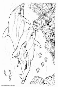 Sea animals for kids. Coloring pages