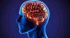 """¿El cerebro solo se """"alimenta"""" de """"azúcar""""?"""