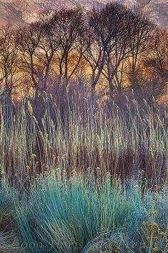 Desert Color by Floris van Breugel - Early morning light illuminates this peaceful desert foliage scene in the Owen's Vally Landscape Photos, Landscape Art, Landscape Paintings, Landscape Design, Landscape Photography, Nature Photography, Photography Basics, Beautiful World, Beautiful Places