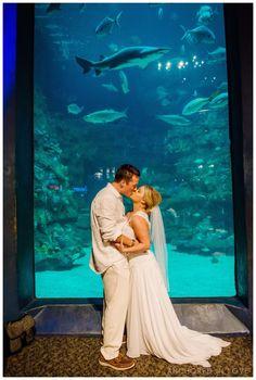 137 best weddings under the sea images atkins aquarium wedding
