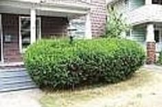 How to Remove Bushes From the Garden | eHow