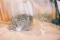 double exposure cat